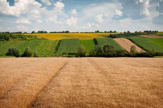 Оформление земельного пая сельхозназначения в личную собственность